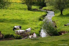 Koeien en meanderende beekjes kleuren het landschap.