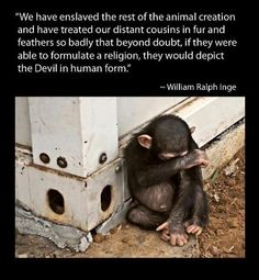 I find this photo incredibly sad~the little fingers and toes, the little belly button-so human yet we experiment on them and leave them to languish in barren cages. This little ape suffers no less than a human baby. What a hostile world humans have created ~