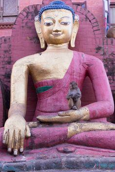 Monkey at de temple bouddhique de Swayambhunath, Kathmandu_ Népal