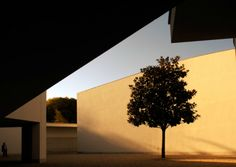 one tree, a museum.    The Serralves Foundation Museum was designed by Portuguese architect Álvaro Siza Vieira and completed in 1999. Located in the Quinta de Serralves, a large property close to the center of Porto, it was the first large-scale contemporary art museum in Portugal.