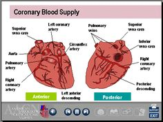ecg interpretation nursing | Cardiac Anatomy Physiology ECG Interpretation Basics Sinus Rhythms ...