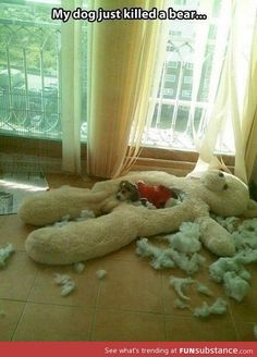 sad thing is... my dog would do this. but would destroy it way worse.