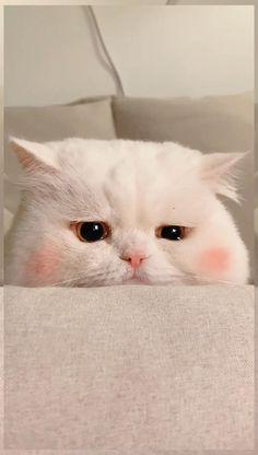 Funny Cute Cats, Cute Baby Cats, Cute Little Animals, Cute Cats And Kittens, Cute Funny Animals, Kittens Cutest, Baby Kitten Videos, Gato Gif, Cute Cat Wallpaper