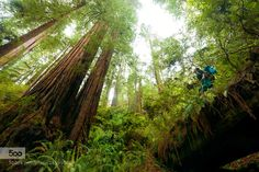 Redwood Forest by MarcBaechtold. Please Like http://fb.me/go4photos and Follow @go4fotos Thank You. :-)