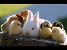10 schattige dieren - YouTube
