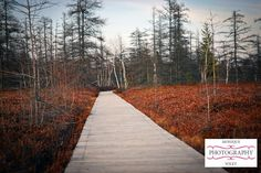 """""""Paths and Trails"""" Photo Contest. If you like what you see, vote for me!"""