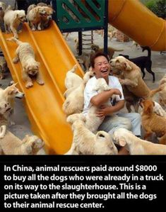 In the Jiangsu Province in China, animal rescuers paid eight thousand dollars to buy all the dogs who were already in a truck on its way to the slaughterhouse. Faith in humanity restored:-) Amor Animal, Mundo Animal, Animal Rescue Center, Funny Animals, Cute Animals, Animals Amazing, Crazy Animals, Wild Animals, Photos On Facebook