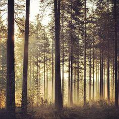Kuhmo, Finland Finland Summer, Cross Country Skiing, The Beautiful Country, Outdoor Recreation, Helsinki, Far Away, Homeland, Trekking, Denmark