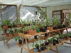 ORQUIDÁRIOS/ESTUFAS – COMO FAZER | orchidsweb
