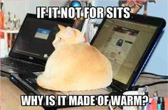 courtneytothemax: ahopeformatt: stine-key: uczenchrystusa: I hate cats. I love cats. I hate cats. I also do not like cats but love this This is how I always imagined my cat to think. Funny Animal Videos, Funny Animal Pictures, Funny Animals, Animal Pics, Adorable Animals, Silly Cats, Funny Cats, Crazy Cat Lady, Crazy Cats