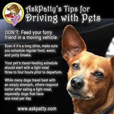 AP-Tips-for-Driving-with-Pets-5