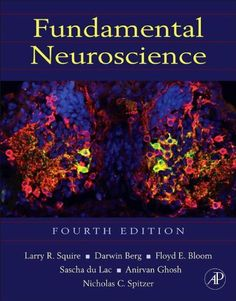 Fundamental Neuroscience (Squire,Fundamental Neuroscience) by Larry Squire. $87.96. Publisher: Academic Press; 4 edition (December 17, 2012). 1152 pages