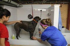 How To Build A Dog Wash Station | aconcordcarpenter.com