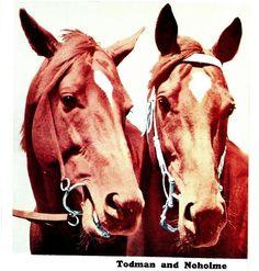 Todman (AUS) & Noholme (AUS)