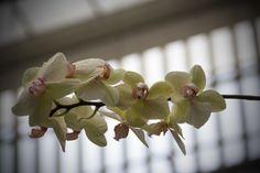 Orquídea blanco rosa