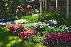 Annual pots and gardens of SunPatiens, pansies, and begonias provide color in front of this Aspen residence.