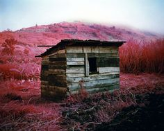 Richard Mosse - Infra (2010-11)  The heart of the Congo captured using dead-stock Kodak infrared film
