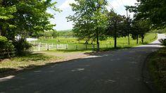 mini donkey farm