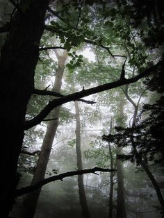 14 janvier 2014 - En Thaïlande, วันอนุรักษ์ทรัพยากรป่าไม้ของชาติ (Wan Anurak Sappayakon Pa Mai Khong Chat),  Journée nationale de la conservation de la forêt.