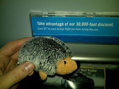 Hedgehog getting ready to get high (on a plane).