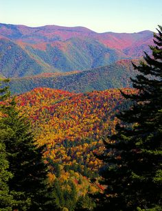 Fall color along the Blue Ridge Parkway in North Carolina