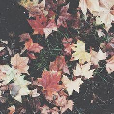 Mid Autumn Mix | Turntable Kitchen