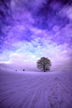 I love trees and purple is my favorite color so naturally I had to pin this.