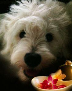 Uso de aceites esenciales en las mascotas
