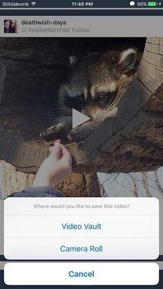 Save #Tumblr Videos