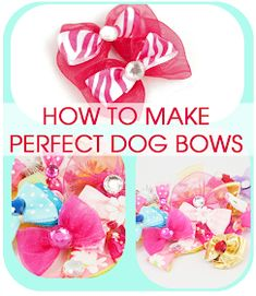Cold Hands Warm Heart: Perfect Dog Bows (Tip from a Professional Dog Groomer) - Pets Dog Hair Bows, Dog Bows, Grooming Shop, Pet Grooming, Yorkies, Dog Crafts, Heart Crafts, Dog Items, Halloween Disfraces