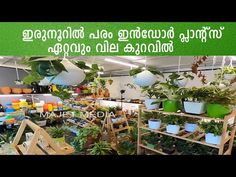 More than 200 indoor plants lowest prices   Indore plant in home   decorate home with indoor plants - YouTube Indore Plants, Garden Online, Indoor, Table Decorations, How To Plan, Youtube, Home Decor, Interior, Decoration Home