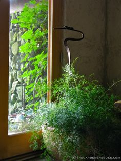 Secret Garden Room - Asparagus Fern & View of the Walled Garden Exterior. Garden Design/Photography: Michaela Medina - thegardenerseden.com