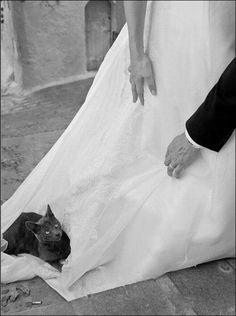 Bridal cat