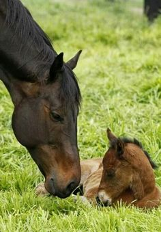Black Caviar and her first foal a filly