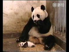 Pool Panda Mom