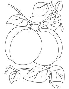 Breathtaking Pair of apricot coloring pages Printable Flower Coloring Pages, Fruit Coloring Pages, Dog Coloring Page, Animal Coloring Pages, Coloring Pages To Print, Coloring Book Pages, Coloring Pages For Kids, Art Drawings For Kids, Outline Drawings