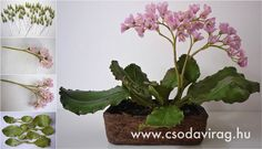 Bergenia (Bőrlevél) - My clay flower https://www.facebook.com/Csodavirag