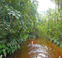 Igarapés - Aracú pesque-pague - Ourém Pa Brasil