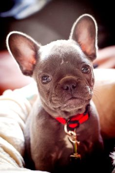 Top 10 Most Affectionate Dog Breeds ~ The Pet's Planet
