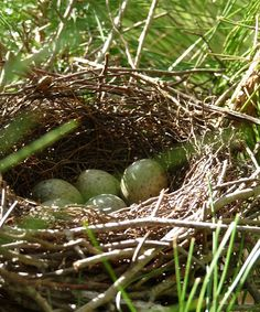 ~ nests are such interesting sculptures done by just a beak