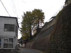 11月10日曇りのち雨 近所の銀杏の葉が色付き始めました。今日は、天領祭りですが夕方より雨、温度も下がりお祭りは、断念しました。