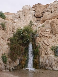 Afterward we went to Ein Geidi which is a nature preserve and I checked out some of the waterfalls. This is also a bit hilly but not nearly as tough as Masada. If you want a beautiful hike but don't want the excess that is Masada, Ein Geidi is a nice substitute.