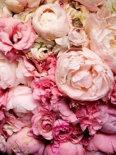 Plátky květin