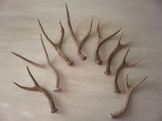 8 Real Deer Antlers Decor Rustic Baskets Gourd Antler Horn Design Art Gift | eBay