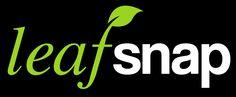Aplicación capaz de reconocer una planta después del análisis de la forma de sus hojas. APLICAR