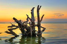 Longboat Key Tree Facebook: Anna Maria Island Beach Life www.annamariaislandhomerental.com