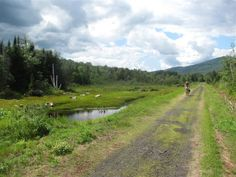 It's a perfect place to hike with your friends, walk your dog, or take a leisurely bike ride. White Mountain National Forest, Mountain View, Picnic Spot, Best Hikes, Trail Running, New Hampshire, Perfect Place, State Parks, Day Trips