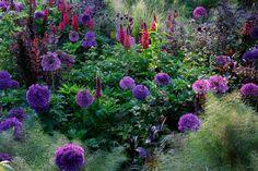 """Purple Dawn"" by Gary Rogers"