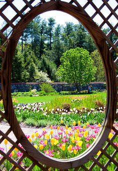 Biltmore Estate - flowers by Mackabee, via Flickr