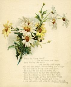vintage daisy illustration | vintage daisy illustration, how do I love thee, ... | Vintage Flowers